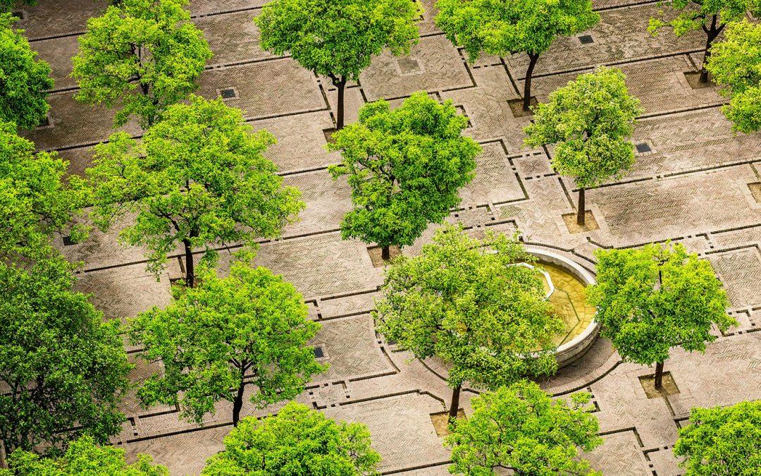 L'arbre en ville, un atout pour un urbanisme durable